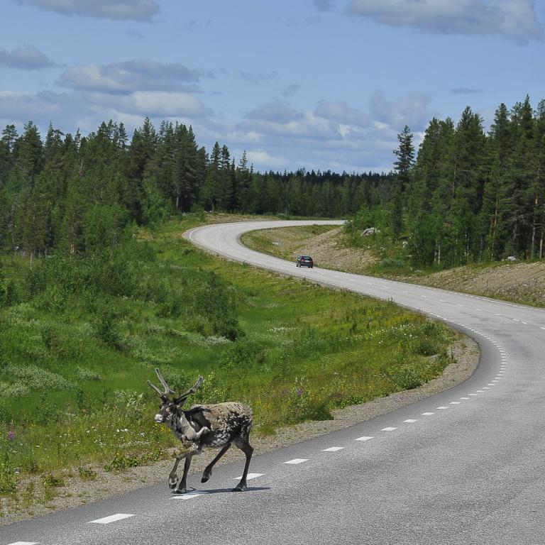 Norvège 3560