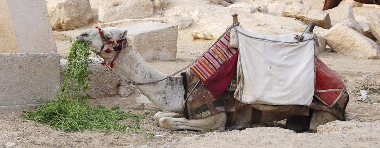 Egypte-1764