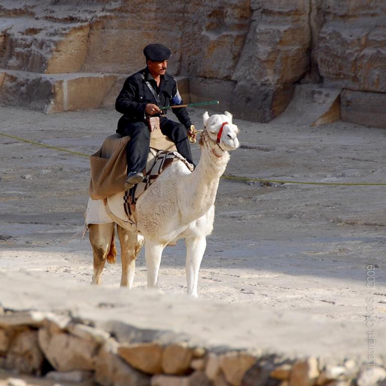 Egypte-1831
