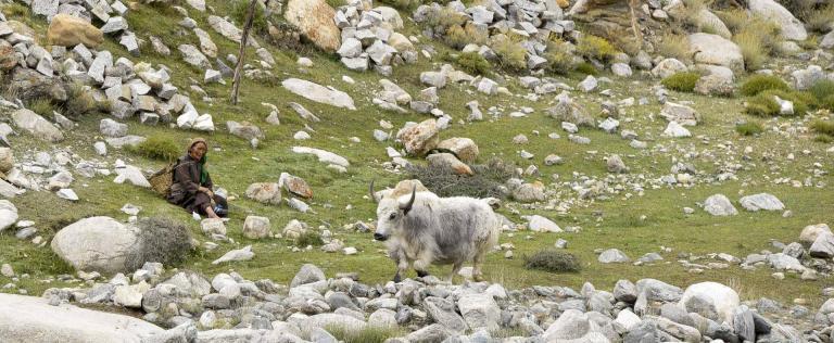 Ladakh-4474